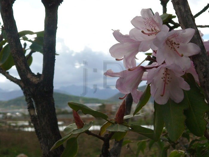 flowerOnTopOfTheWorlds